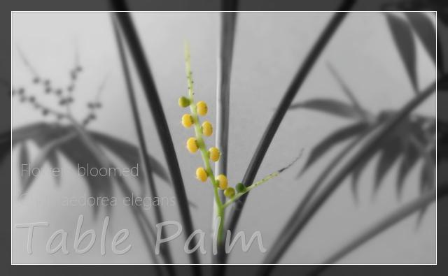 Table_flower_eye