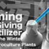 ハイドロカルチャーで育てる室内観葉植物に肥料を与え始めるタイミングは?【ハイドロカルチャー】